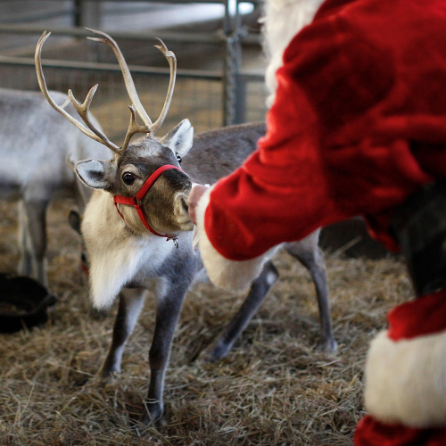 Father Christmas On The Farm 2021!